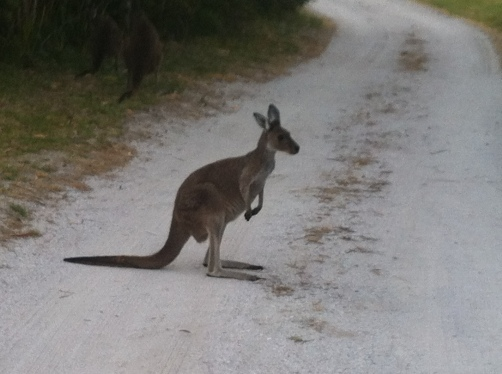 This is just beside our site. Lots of kangaroos and other wildlife to enjoy.