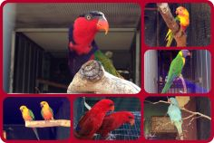 Some of the exotic birds that Paul's brother David breeds from.