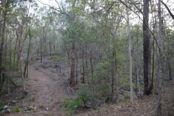 State Park bushland