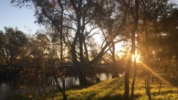 Sunset beyond the trees/