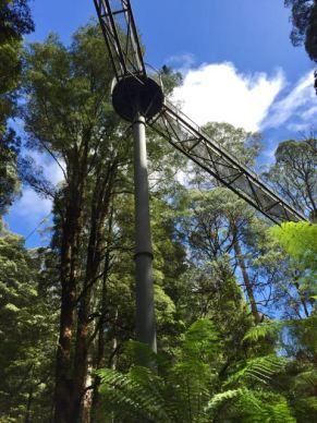 Victoria gr8l1f motorhome trips tree top walk fandeluxe Image collections